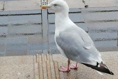 Gull - Pier Head